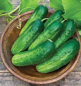 Cucumbers 3